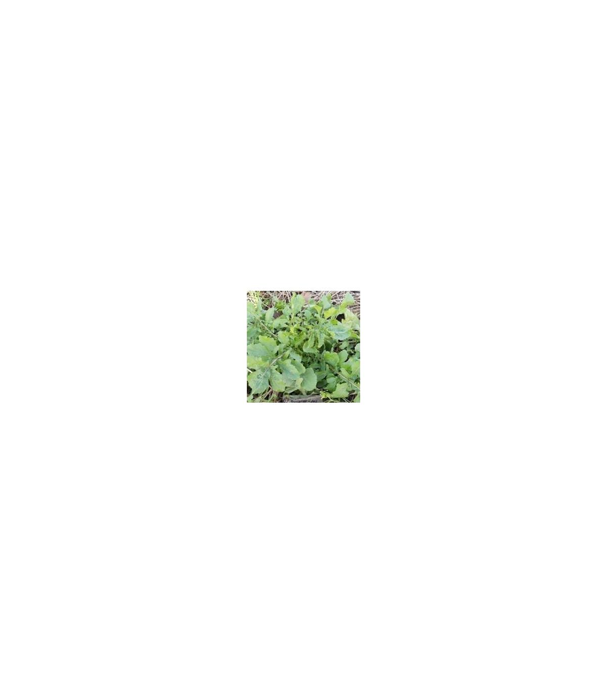 BIO rukola - bio semená rukoly - 0,3 gr