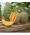 Melón Cantaloupe - predaj semien melónu - 5 ks