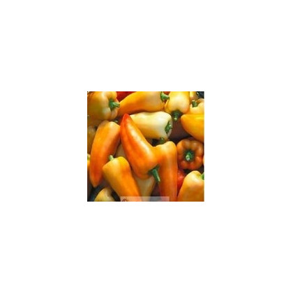 Paprika maďarská Fehér - predaj semien papriky - 20 ks