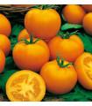 Paradajka kolíková Zlatá kráľovna - predaj semien paradajok - 10 ks