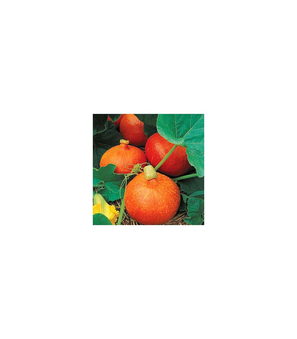 Tekvica Uchiki Kuri - predaj semien tekvice - 5 ks