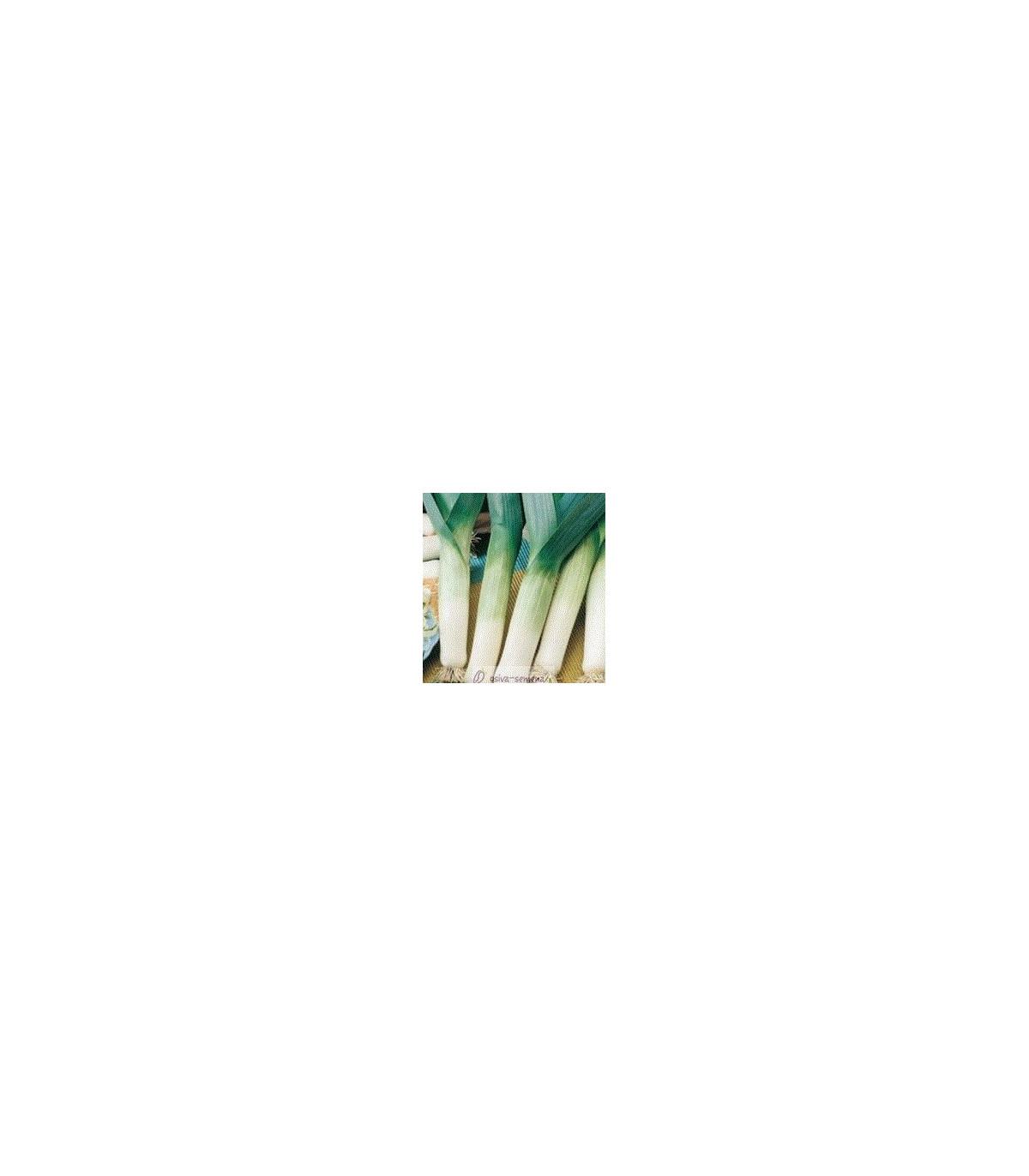 Pór Hanibal - predaj BIO semien póru - kvalitné bio osiva póru - 50 ks