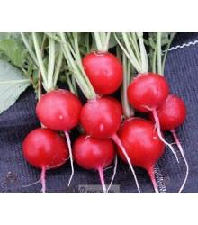 Reďkovka červená guľatá - Carnita - semená reďkovky - semiačka - 50ks