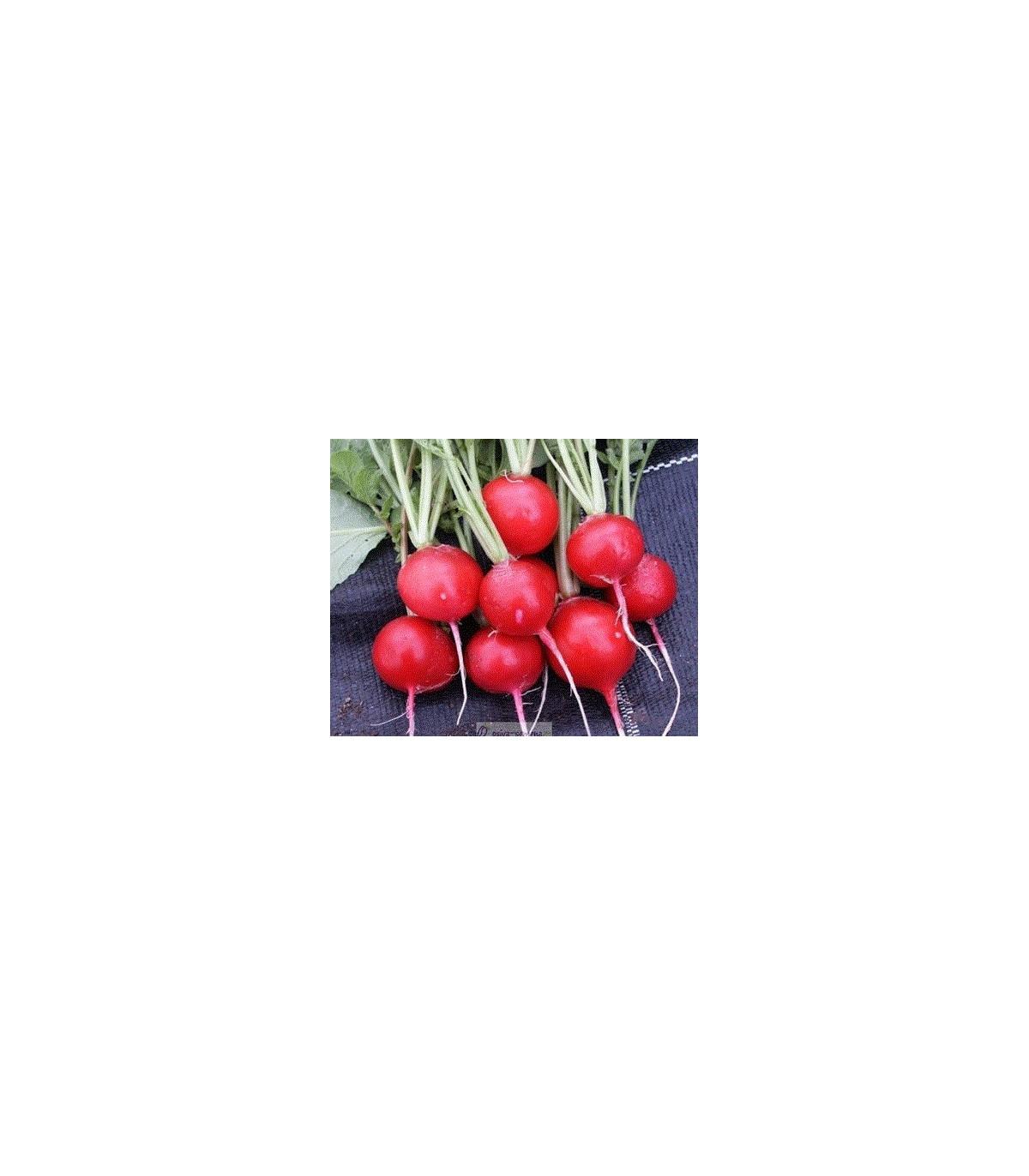 Reďkovka červená guľatá - Carnita - predaj semien reďkovky - 50ks