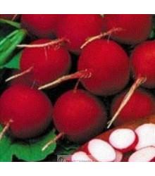 Reďkovka červená skorá - semená reďkovky - semiačka - 0,5 gr