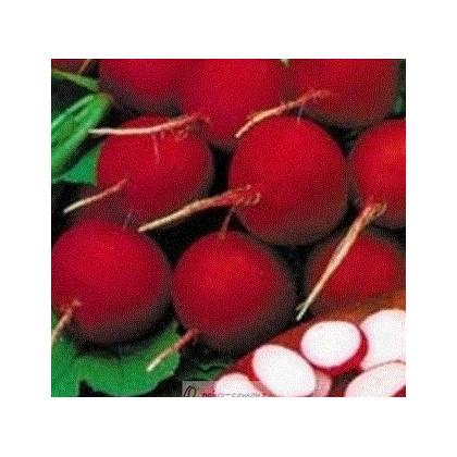 Reďkovka červená skorá - Reďkovka červená skorá - predaj semien reďkovky - 0,5 grredaj semien reďkovky - 0,5 gr