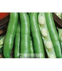 Bôb obyčajný biely - Viti faba - predaj semien bôbu - 20 gr