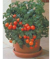Paradajka Patio - semená paradajky - semiačka - 6 ks
