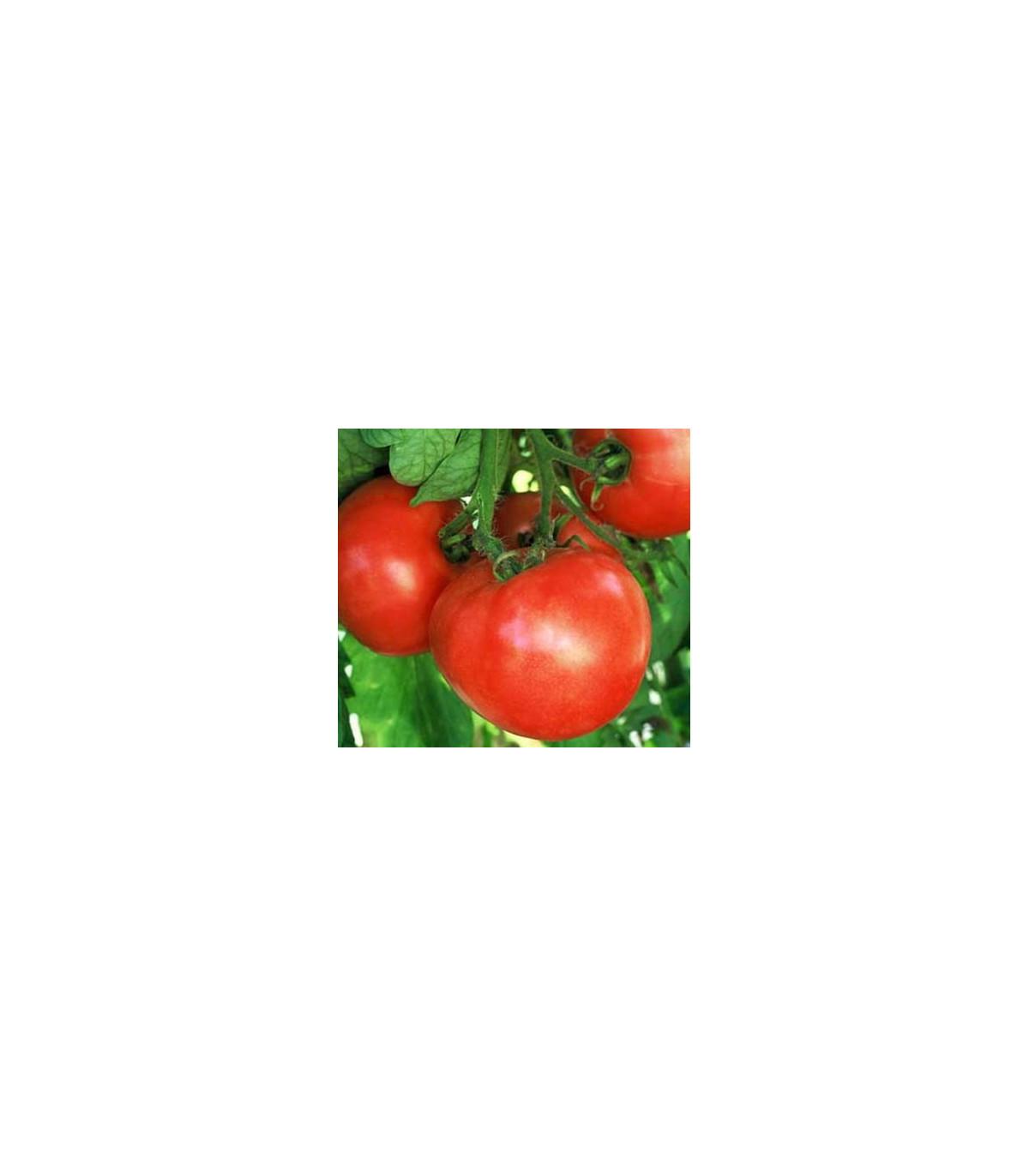 Paradajka ranný zázrak - semená paradajok - 6 ks
