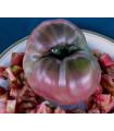 Paradajka - Carbon - najčernejšia paradajka - semená paradajok-6 ks