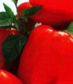 Paprika Merit - predaj semien papriky - Capsicum annuum - 20 ks