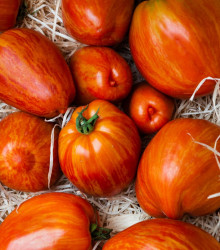 Paradajka Tigerella - Solanum lycopersicum - rajčiak - semená - 6 ks