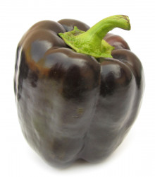 Paprika Fialová Kráska - semená papriky - semiačka - 9 ks