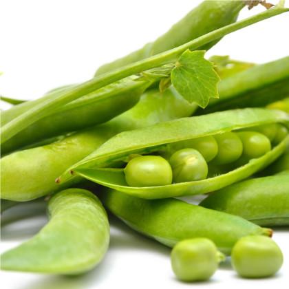 Hrach dreňový siaty - Pisum sativum - semená hrachu - semiačka - 40 ks