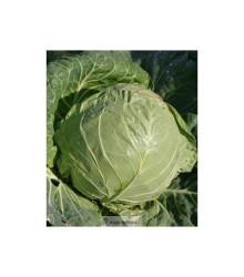 More about BIO Biela kapusta Premier - Brassica oleracea - semená kapusty - semiačka - 0,3 gr