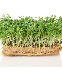 BIO žerucha Kresso - semená žeruchy - semiačka - 150 ks