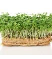 BIO žerucha Kresso - semená žeruchy - semiačka - 0,5 gr
