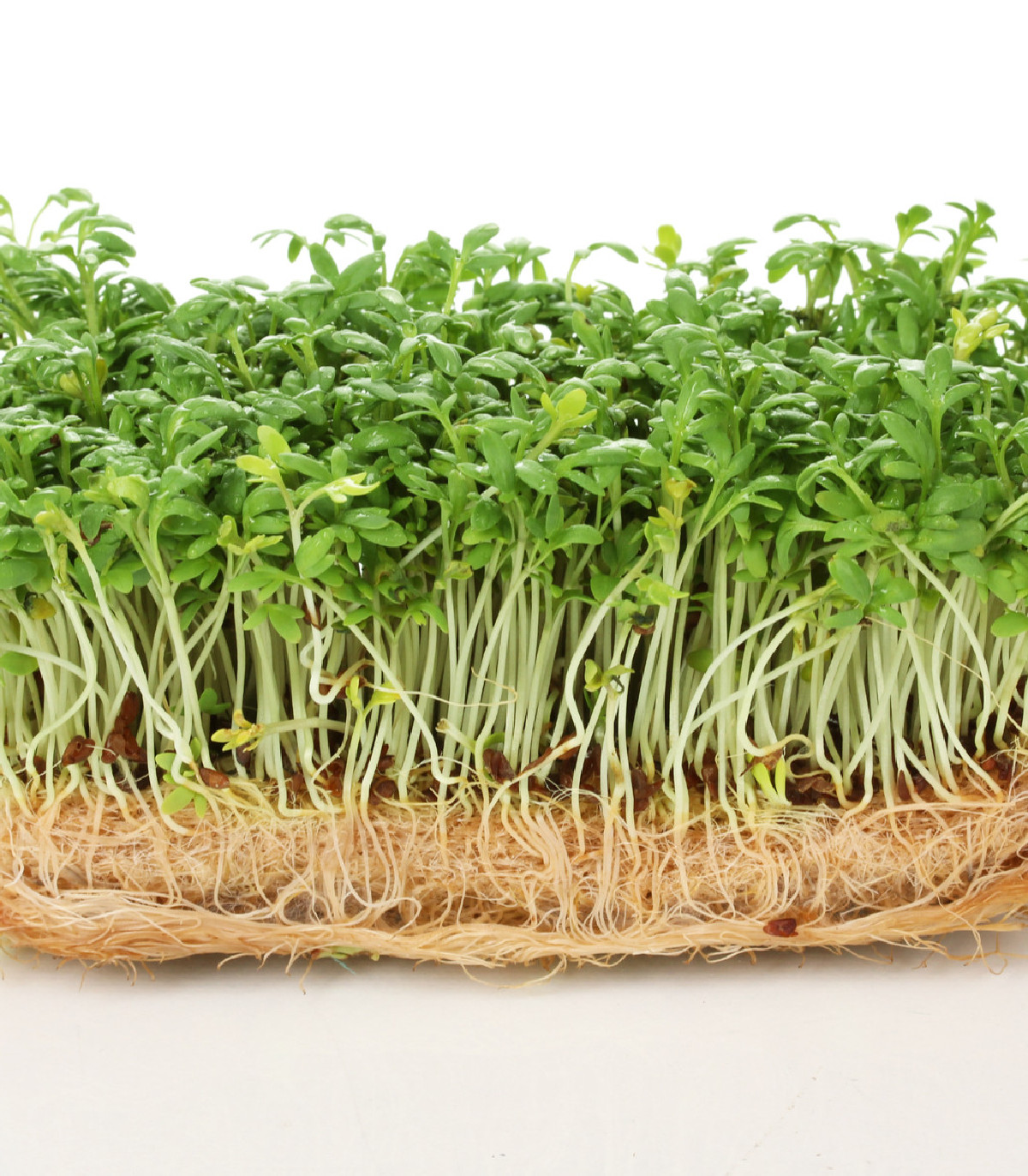 BIO žerucha Kresso - Lepidium sativum - bio semená žeruchy - 150 ks