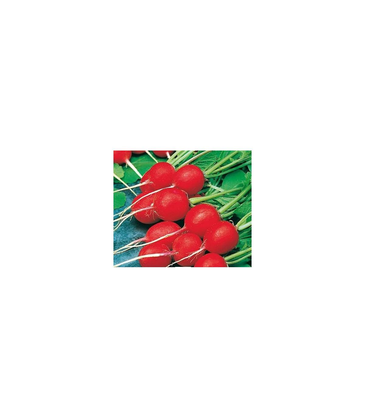 Reďkovka Ilka - Rahanus sativus - semená reďkovky -  semiačka - 50 ks