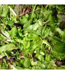 Mix orientálnych šalátov - semená šalátu - semiačka - 50 ks