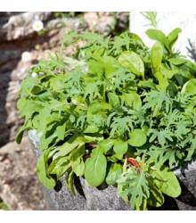 Mix kalifornských šalátov - semená šalátu - semiačka - 0,1 gr