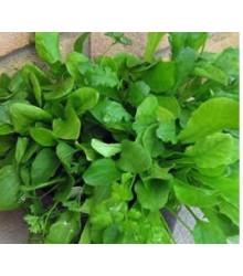More about Mix provensálskeho šalátu - semená šalátu - semiačka - 0,1 gr