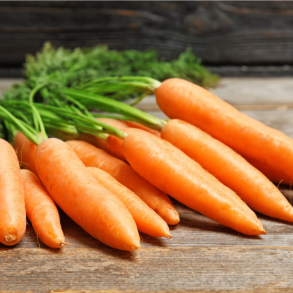 BIO mrkva Rothild veľmi skorá - Daucus carota - bio semená mrkvy - 0,5 g