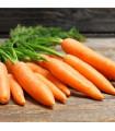 BIO Mrkva Rothild veľmi skorá - Daucus carota - bio semená - 0,5 g