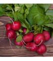 Reďkovka Topsi - semená reďkovky - semiačka - 0,5 gr