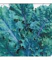 Kaleráb červený ruský - Brassica oleracea - semená kalerábu - semiačka - 0,5 gr