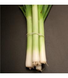 Pór - pórik zimný Natan - Allium porrum - semená póru - semiačka - 1,5 gr