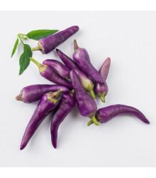 Chilli Jalapeno fialové - semená chilli - semiačka - 6 ks