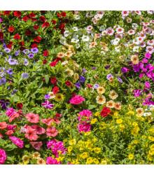 Zmes letničiek Visuté záhrady - semená - 0,9 g