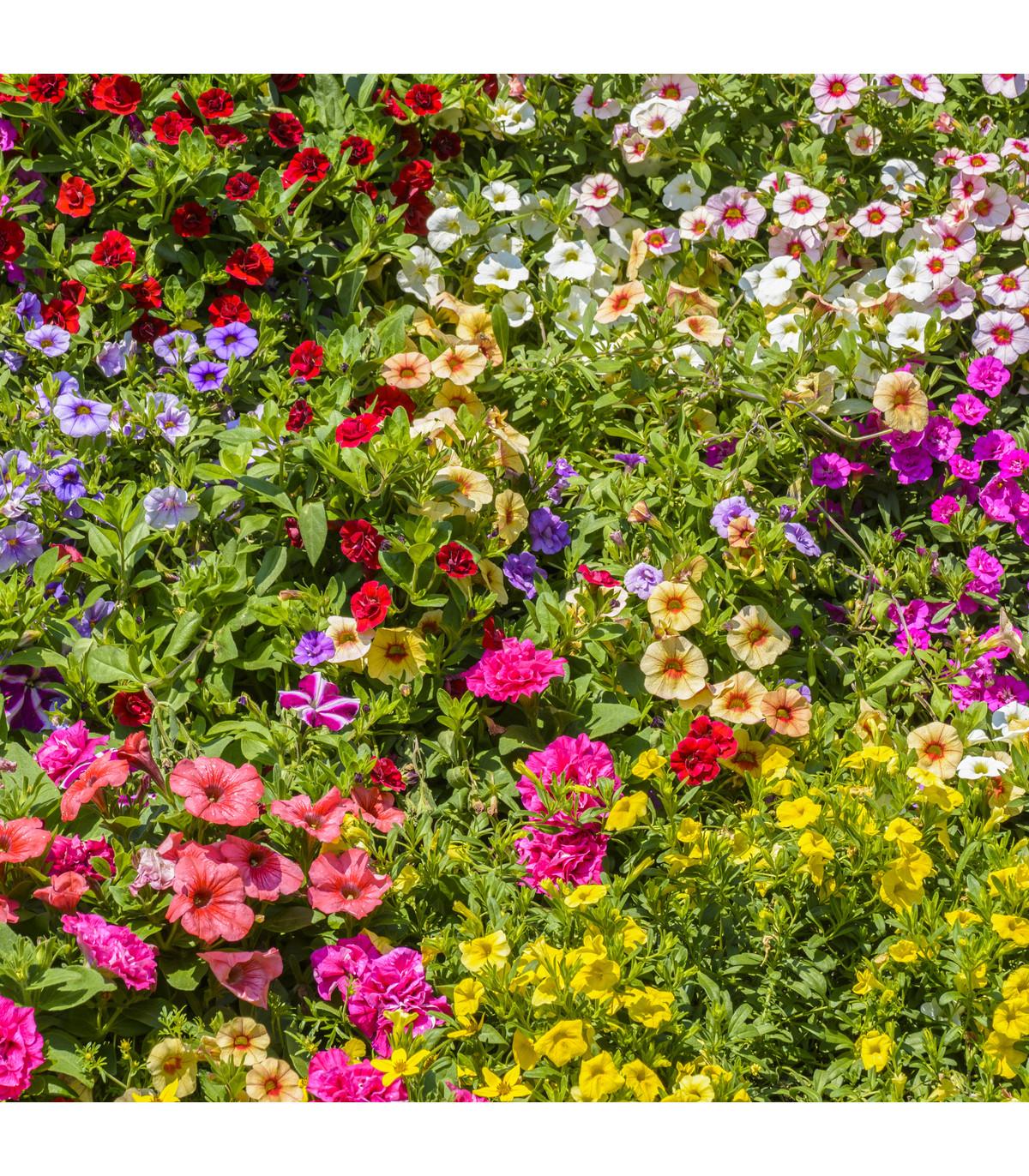 Letničky zmes Visuté záhrady - semená letničiek - 0,9 g
