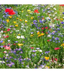 Zmes letničiek Divoké poľné kvety - semená - 0,9 g