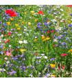 Letničky zmes - divoké poľné kvety - semená letničiek - semiačka - 0,9 gr