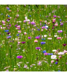 Zmes letničiek Japonská záhrada - semená - 0,9 g