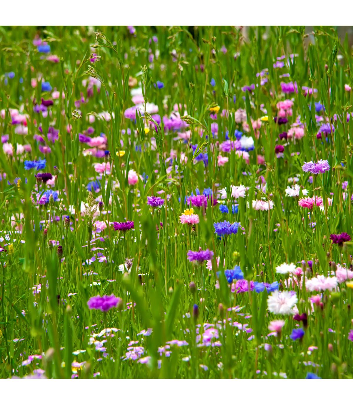Letničky zmes - Japonská záhrada - semená letničiek - 500 ks