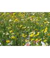Letničky nízke - Kovbojská lúka - semená letničiek - semiačka - 0,9 gr
