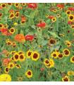 Letničky zmes - záhradný sen od žltej do červenej - semená letničiek - semiačka - 0,9 gr