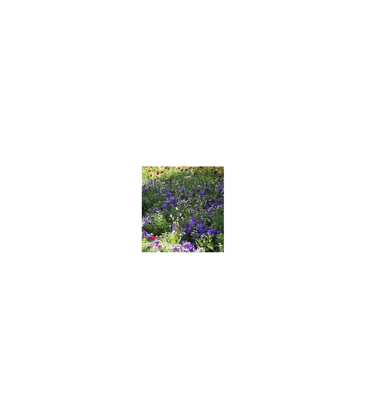 Zmes letničiek Záhradný sen - modrá - semená - 0,9 g