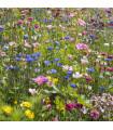 Letničky nízke Rozprávková zmes - semená letničiek - semiačka - 0,9 gr
