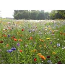 Zmes letničiek - lúčnych kvetov a bylín - semená - 0,9 g