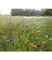 Zmes lúčnych kvetov a bylín - semená letničiek - semiačka - 0, 9 g
