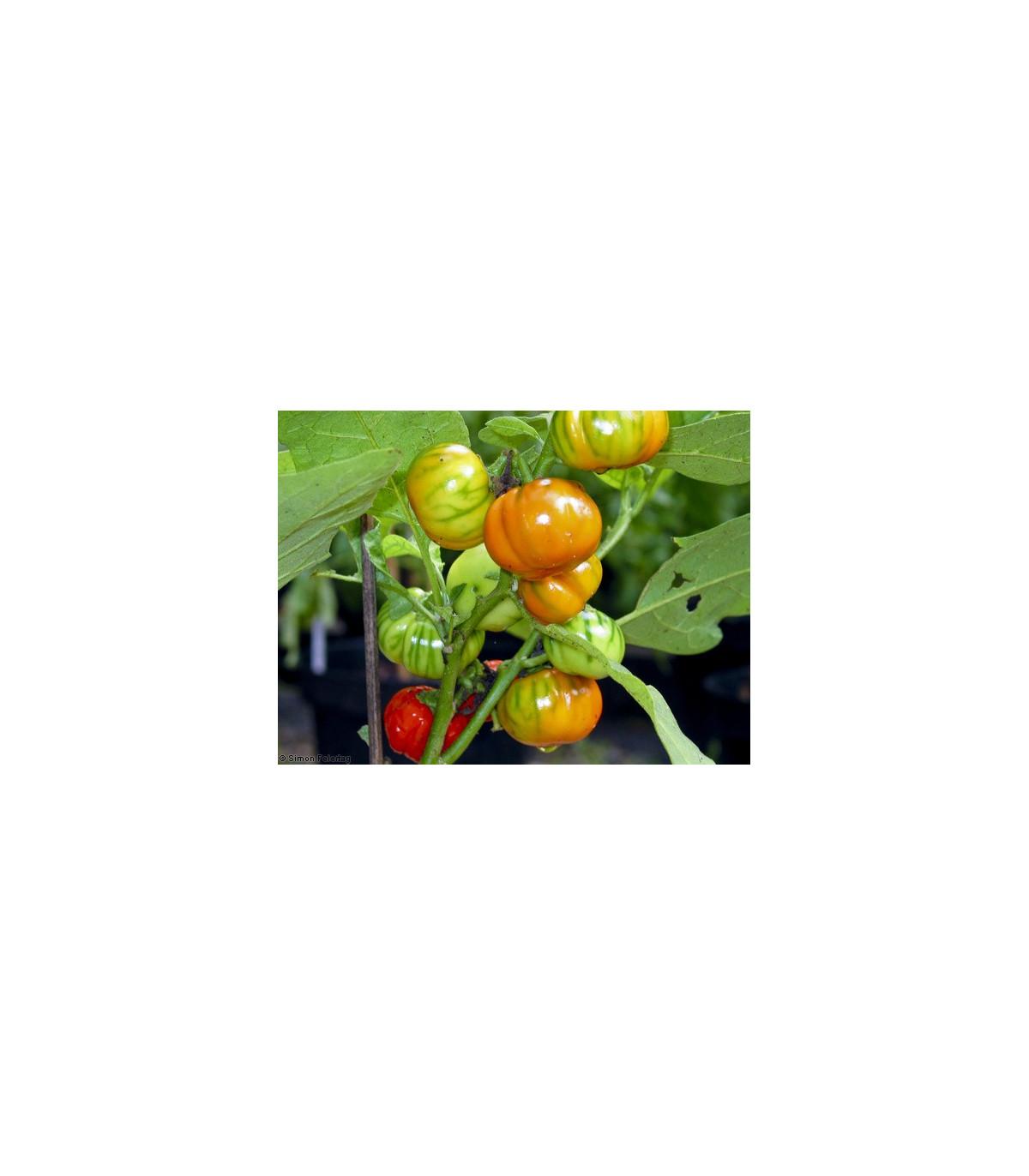 Baklažán pruhovaný - semená baklažánu - semiačka - 6 ks