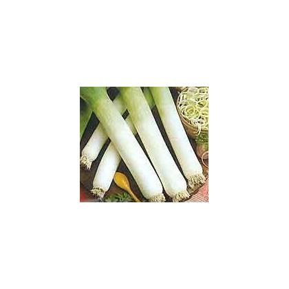 Pór Genita - Allium porrum - semená póru - semiačka - 1,5 gr