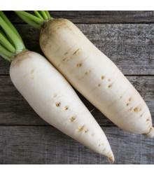 Reďev biela Rex - semená reďkve - semiačka - 80 ks