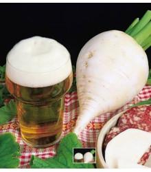 Reďkev polodlhá biela k pivu - semená reďkve - semiačka - 60 ks
