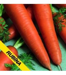 Mrkva Rubina - Daucus carota - semená mrkvy - semiačka - 1 gr