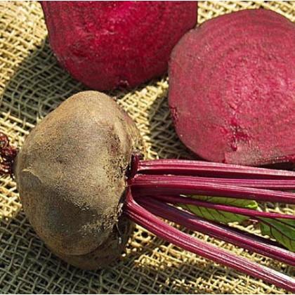 Cvikla tmavočervená - semená repy - semiačka - 1 gr